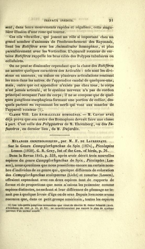 Melanges Ornithologiques: Sur le Genre Campylorhynchus de Spix (1824)