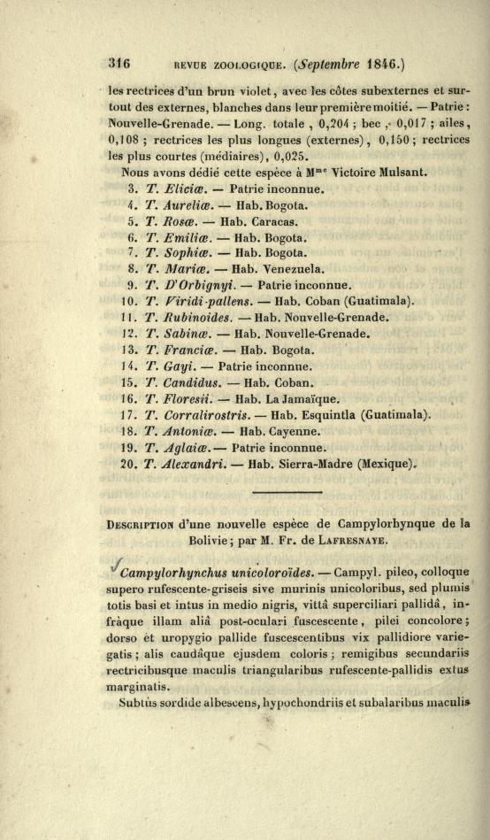 Description d'une Nouvelle Espece de Campylorhynque de la Bolivie